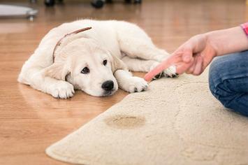 Carpet cleaner birkdale